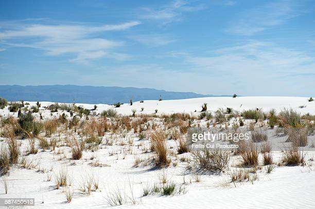 Plants at White Sands National Monument New Mexico