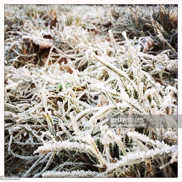 Plants Covered With Frost