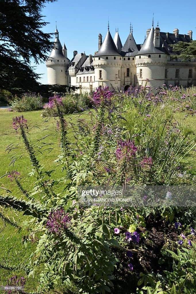 Plants grow in the garden of Chaumont Castle on August 23 in ChaumontsurLoire central France / AFP / JEANFRANCOIS MONIER