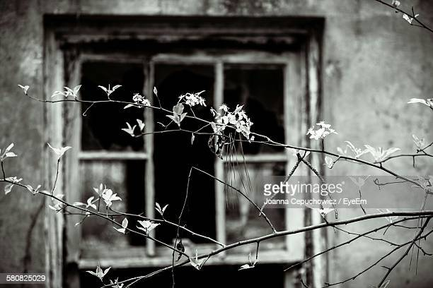 Plants Growing Against Abandoned House