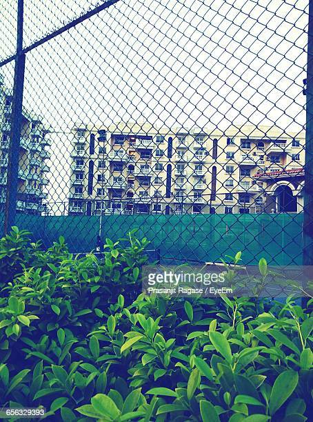 Plants Growing Against Chainlink Fence In City