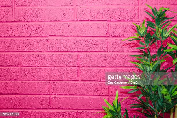 Plants Growing Against Pink Painted Wall