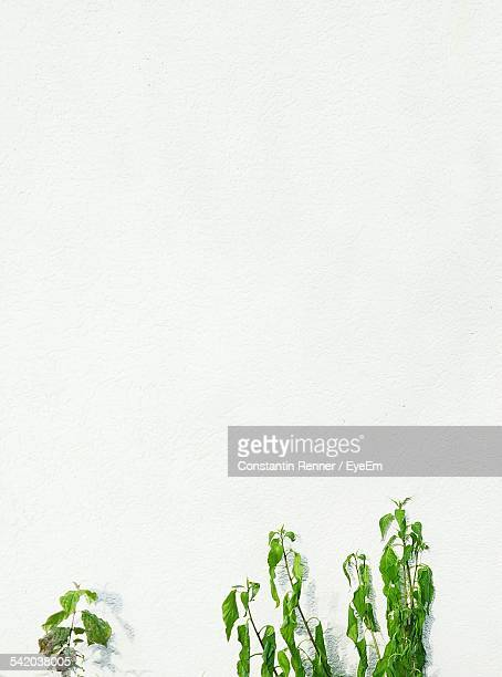 Plants Growing Against White Wall Outdoors