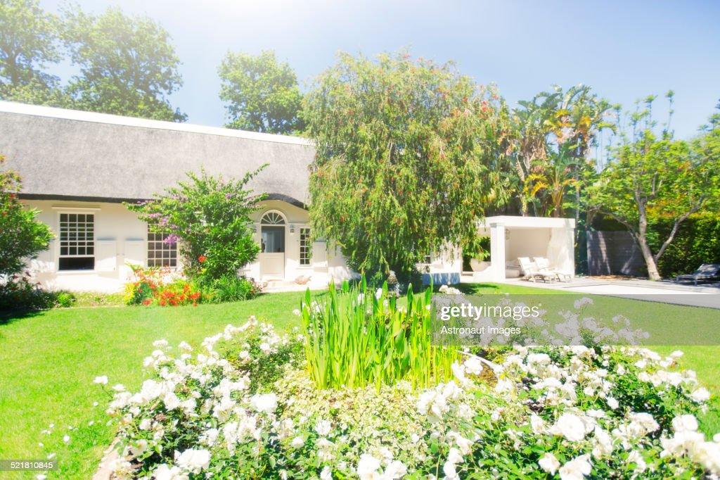 Plants Growing In Backyard Of Modern House Bildbanksbilder ...
