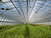 A large greenhouse garden center plant nursery. The agriculture retail business waters the young plants with overhead spray equipment.