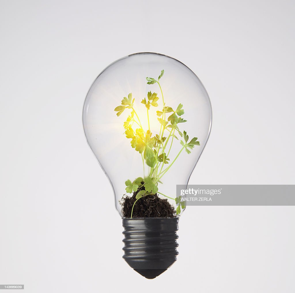 plants growing in light bulb stock photo getty images. Black Bedroom Furniture Sets. Home Design Ideas