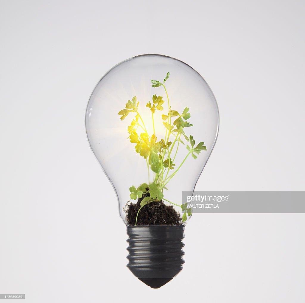 Plants growing in light bulb