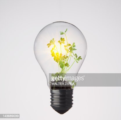 Plants growing in light bulb
