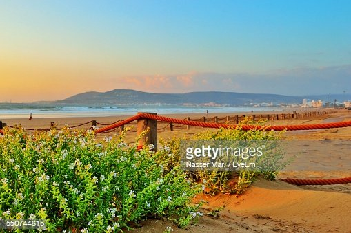 Plants Growing On Beach Against Sky At Sunset