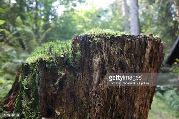 Plants Growing On Damaged Tree Trunk
