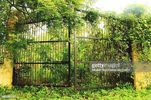 Plants Growing On Gate