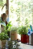 plants growing on kitchen window ledge
