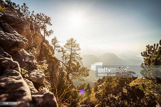 Plants growing on rocky rural hillside