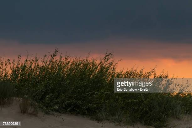 Plants Growing On Sand Dune Against Sky