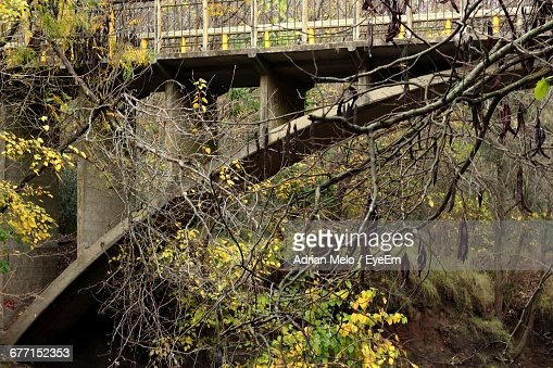 Adrian branch stock photos and pictures getty images - Flowers that grow on tree trunks ...