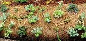 Plants growing through woven landscape fabric