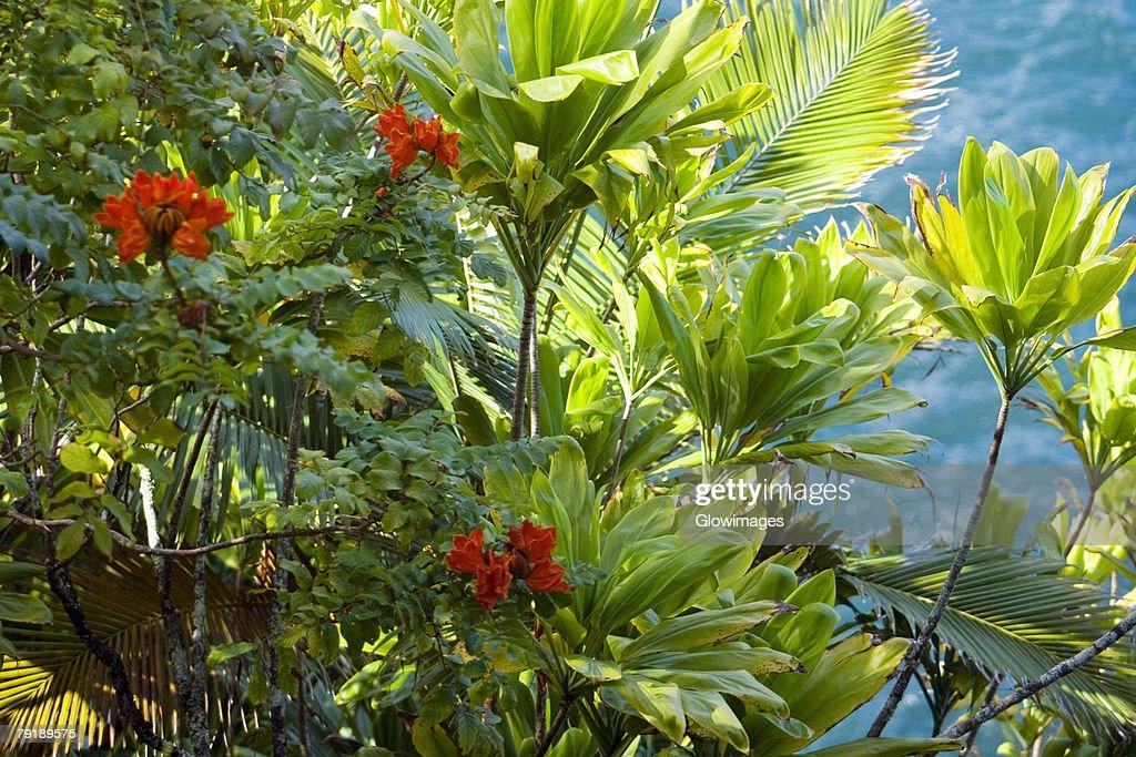 Plants in a botanical garden, Hawaii Tropical Botanical Garden, Hilo, Big Island, Hawaii Islands, USA : Foto de stock