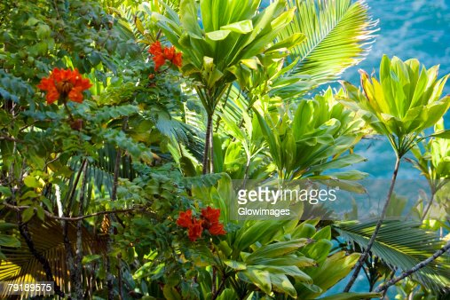 Plants in a botanical garden, Hawaii Tropical Botanical Garden, Hilo, Big Island, Hawaii Islands, USA : Stock Photo