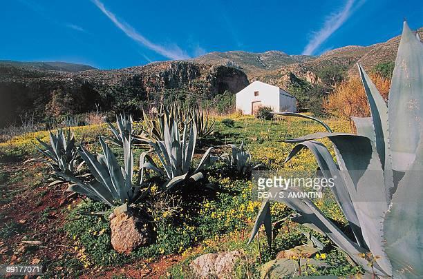 Plants in a reserve park Zingaro Nature Reserve San Vito lo Capo Sicily Italy