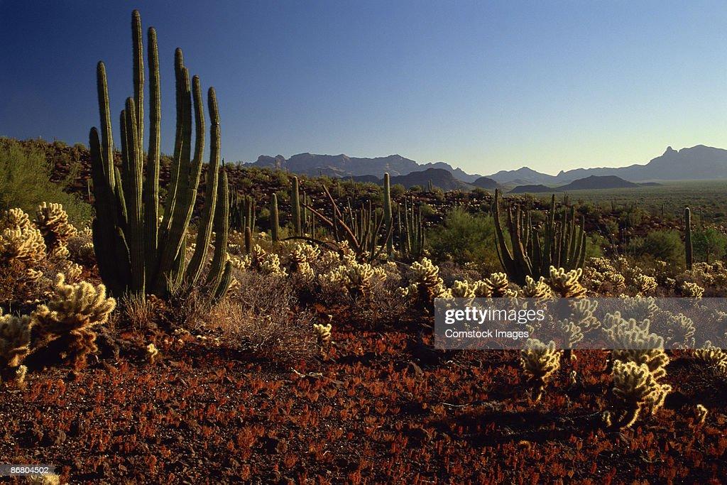 Plants in desert