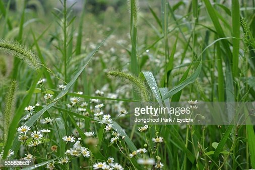 Plants In Meadow