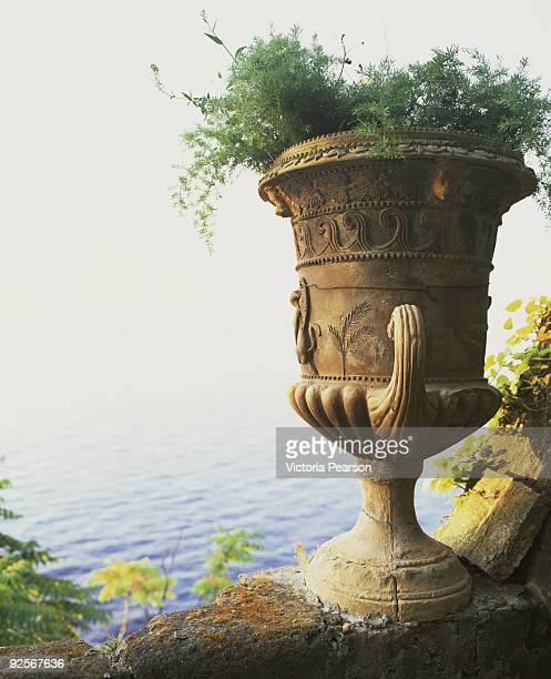 Plants in urn by ocean