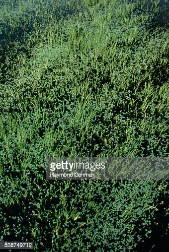 Vernal pool stock photos and pictures getty images