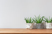 Three plants in fabric pot covers standing on white, empty wall