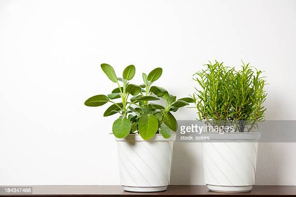 plants on white