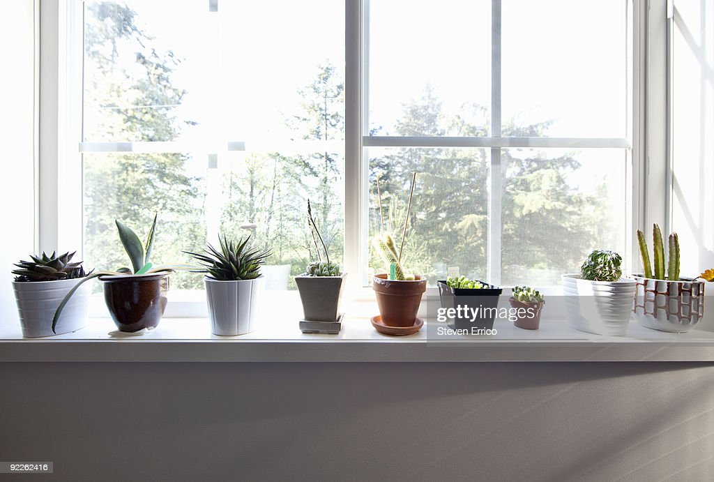 Plants sitting on window sill : Stock Photo