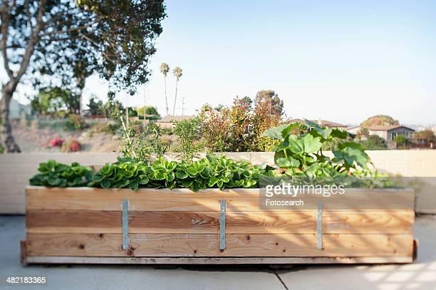 Plants trough on terrace