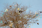 Plastic Bags in Bare Tree