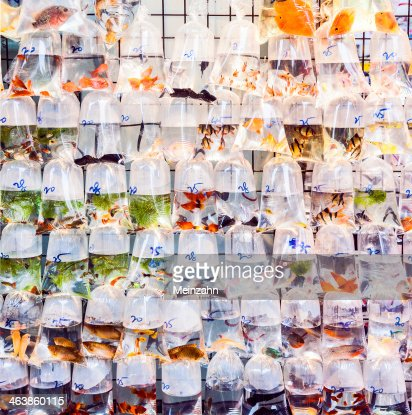 plastic bags of fishes for sale : Stock Photo