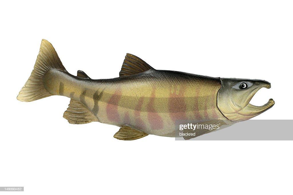 Plastic Fish : Stock Photo