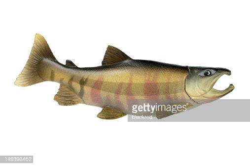 Plastic Fish : ストックフォト