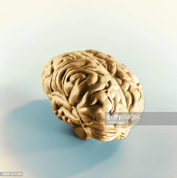 Plastic Human Brain