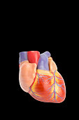 Plastic model of human heart isolated on black background. This artificial organ model is used for education in high school to learn students about biology. They learn about the human body and how our