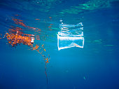 A discarded plastic drinking cup floats at the surface of the Sea.  Next to it is a piece of seaweed floating in the otherwise clear blue water.  This image was taken to convey the concept of mans neg