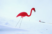 A plastic pink flamingo is seen stuck in the snow at Summit Station on July 11 2013 on the Glacial Ice Sheet Greenland As the sea levels around the...