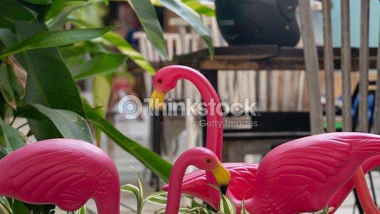 1dec6ab20709a Flamants Roses En Plastique Et Feuilles Vertes Photo | Thinkstock