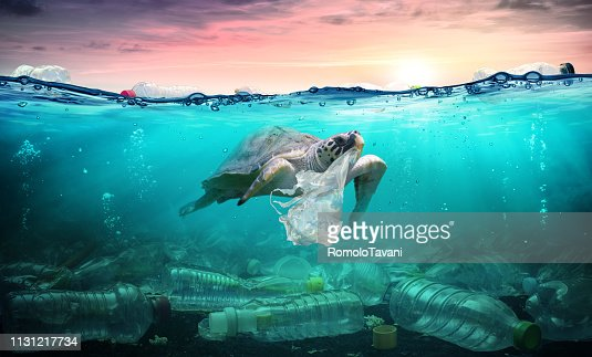 Plastic Pollution In Ocean - Turtle Eat Plastic Bag - Environmental Problem : Stock Photo