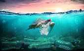Environmental Problem - Plastic Pollution In Ocean - Turtle Eat Plastic Bag -