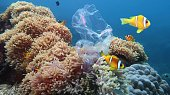 Beautiful coral reef with sea anemones and clownfish polluted with plastic bag - environmental protection concept