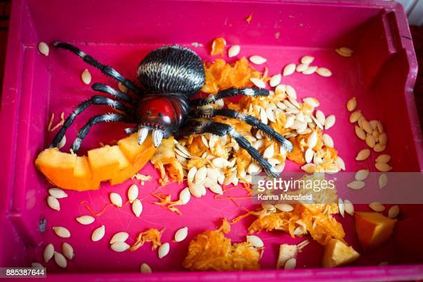 Plastic spider eating pumpkin