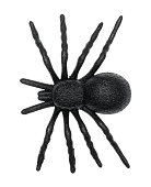 Top view of a plastic toy spider isolated on a white background.
