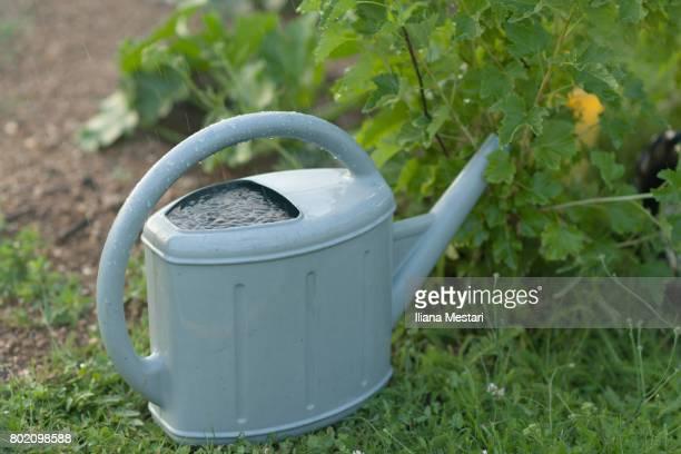 Plastic water pan in a garden