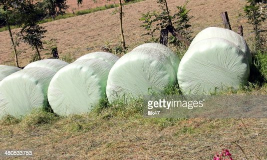 Plastic wrapped round hay bales : Stock Photo