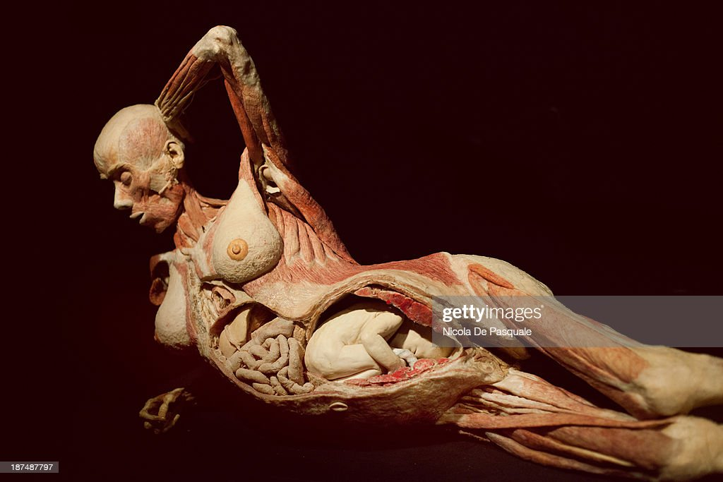 science body world exhibition rome pictures | getty images, Muscles