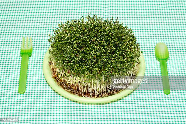 Plate of cress on green tablecloth