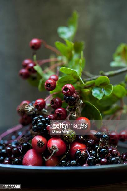 Plate of mixed wild berries